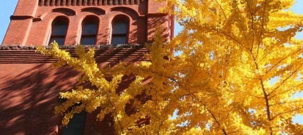 Yellow trees around fall